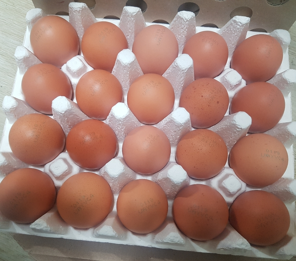 수원축협 무항생제 인증 청국장을 먹인 닭이 낳은 계란 20구 리뷰 후기